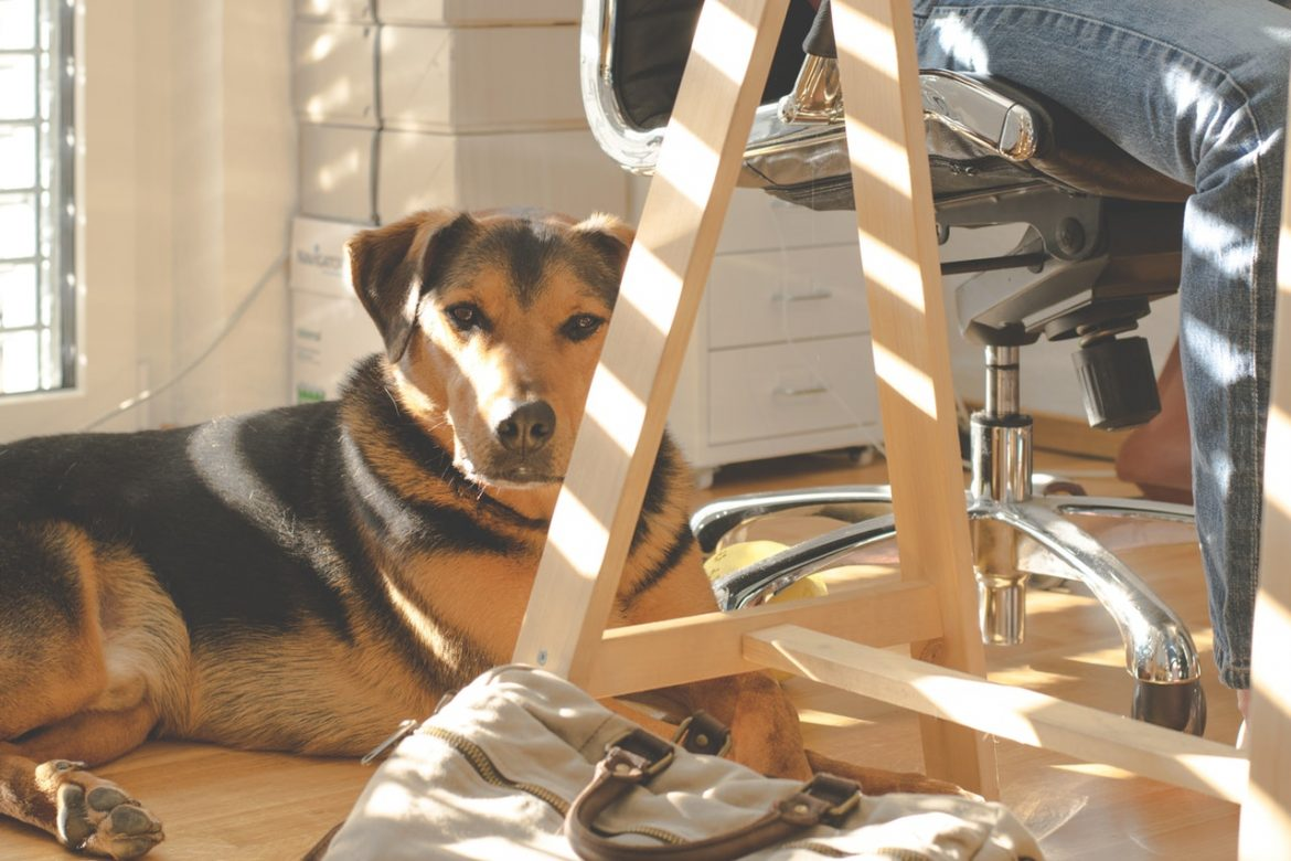 Puppy Proofing: Optimizing Office Spaces for Your Furry Friends